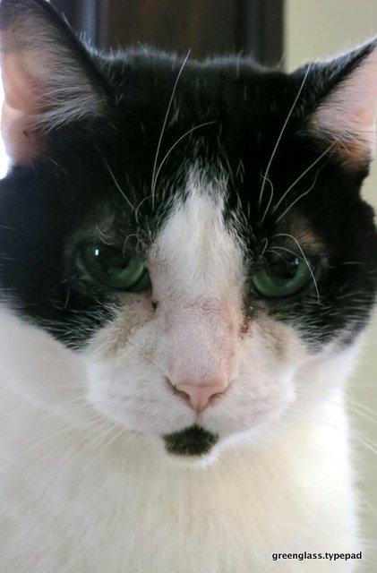 1-cat.1593