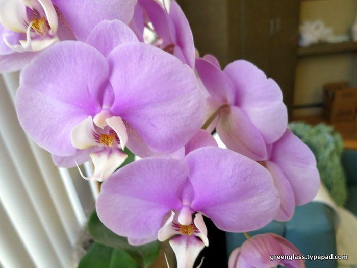 1-flowers.6791